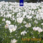 various artists - kamp holland outside front